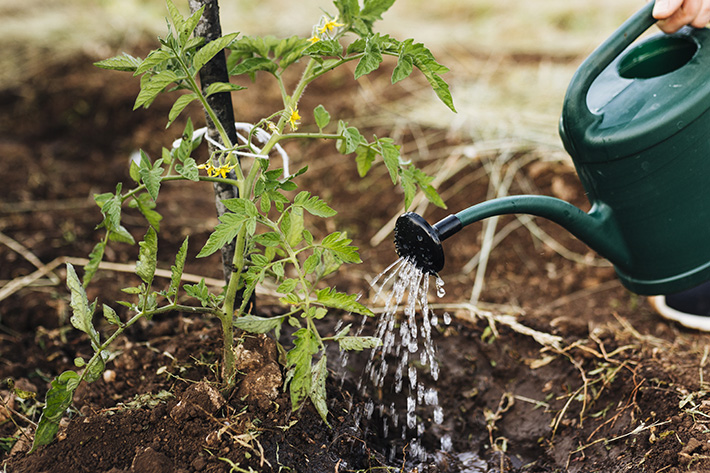 Plantação orgânico