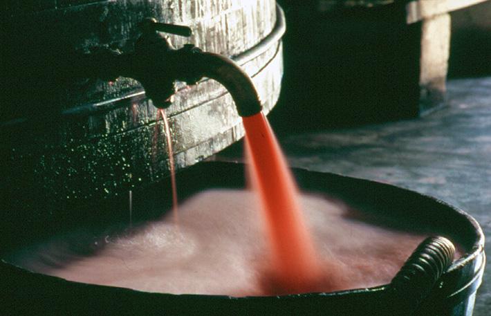 Vale dos Vinhedos: Bento Gonçalves, vinho