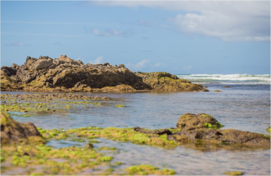 litoral baiano