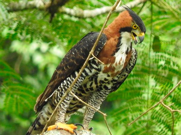 Aves de Rapina - Plaza Caldas da Imperatriz